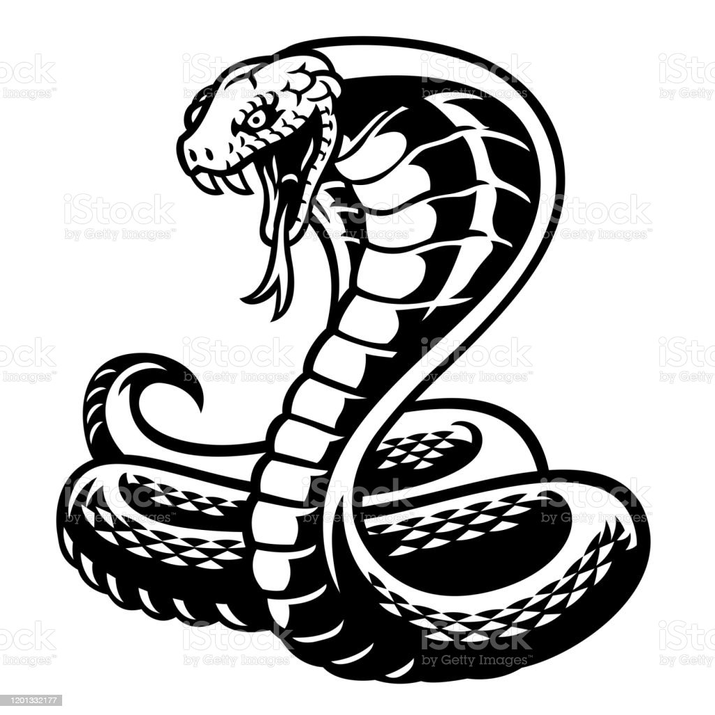 https www istockphoto com fr vectoriel style de tatouage de serpent de cobra en noir et blanc gm1201332177 344479407