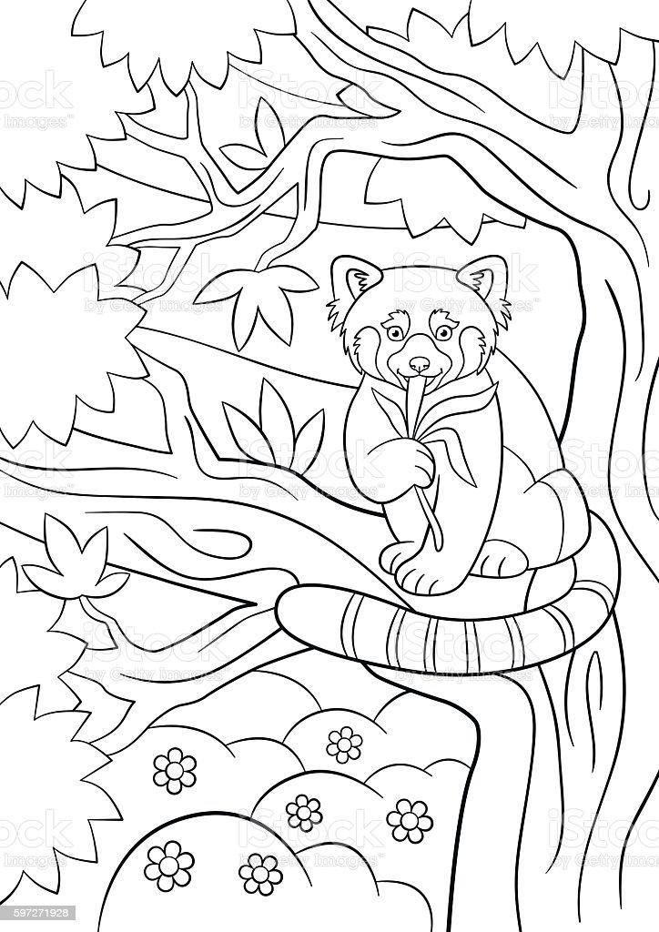 coloring pages little cute red panda eats leaves stock vector art