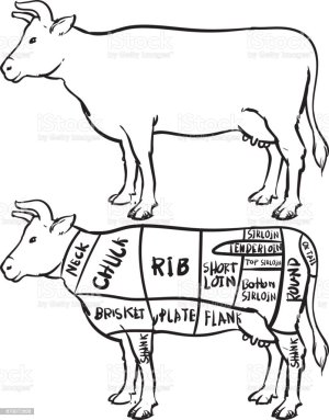 Cow Cuts Diagram And Butchery Set Hand Drawn Beef Isolated