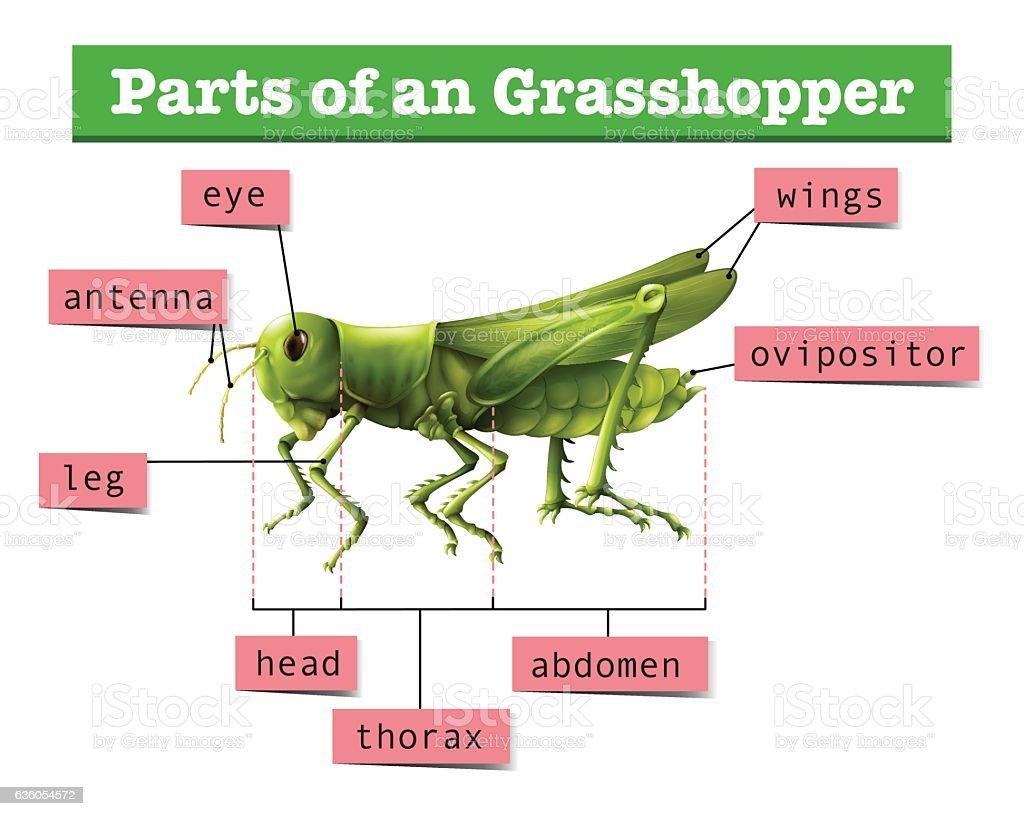Grasshopper Fishing Vessel Schematic - WIRE Center •