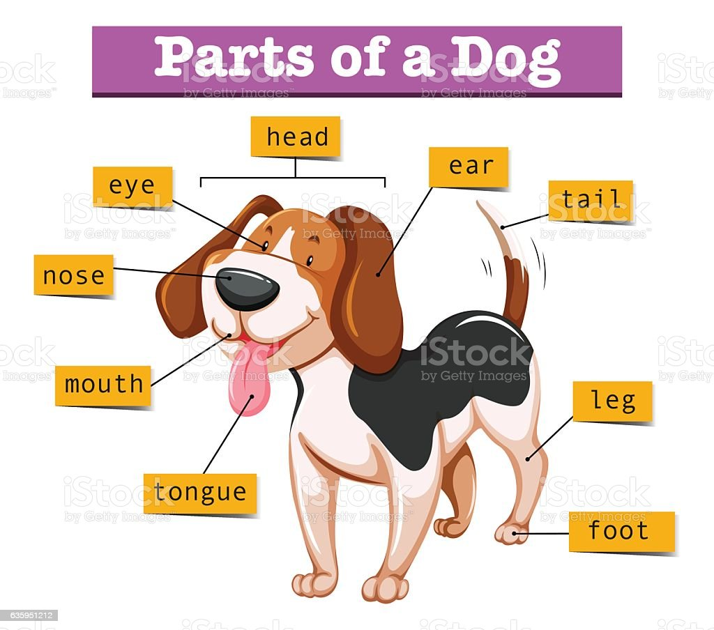 Dog Body Parts Diagram - Library Of Wiring Diagram •
