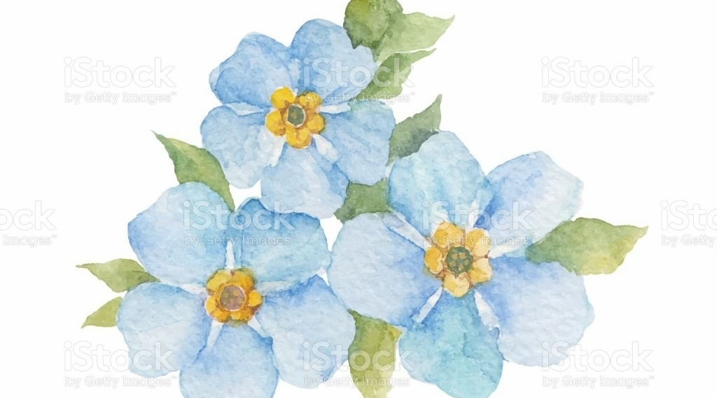 Forgetmenot Flowers Isolated On White Background Stock ...