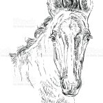 Horse Portrait Vector 29 Stock Illustration Download Image Now Istock