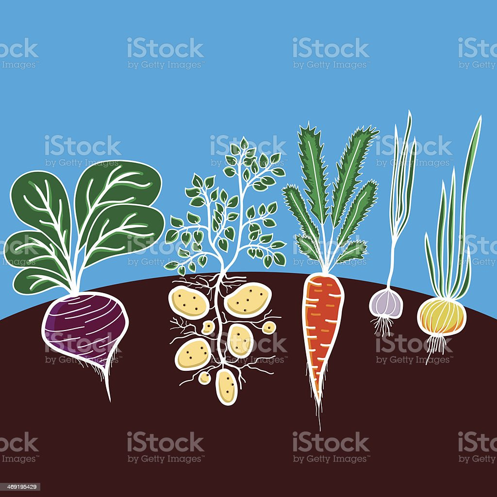 Vegetable Garden Design Plans