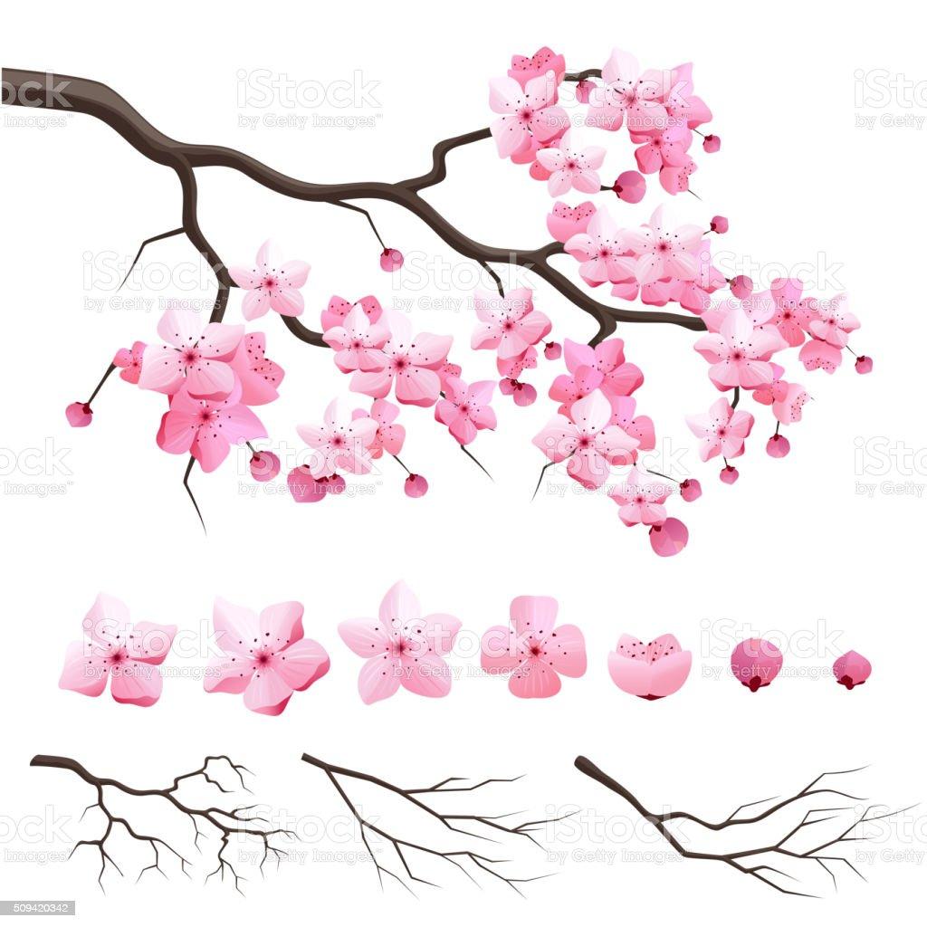 Dessin Branche Cerisier Japonais Gamboahinestrosa