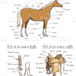 Parts Of Western Horse Saddle Bridle Set Equine Anatomy Equestrian Scheme Text Stock Illustration Download Image Now Istock