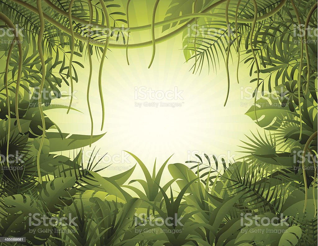 Rain Forest Stock Vector Art More Images Of Amazon Rainforest 455588681 IStock