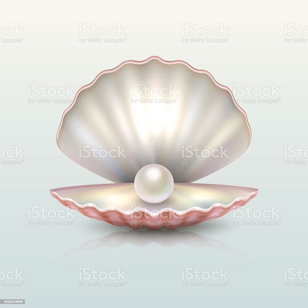Royalty Free Pearl Shell Clip Art Vector Images