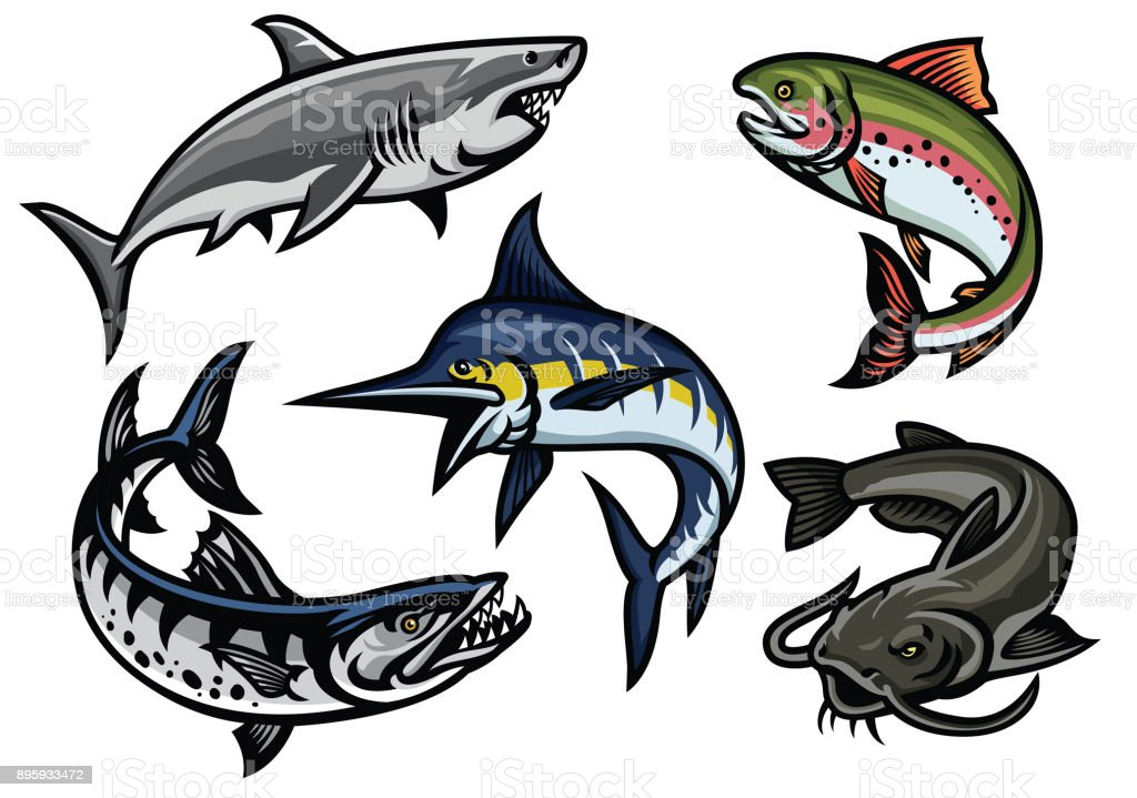 Best Barracuda Illustrations Royalty Free Vector Graphics