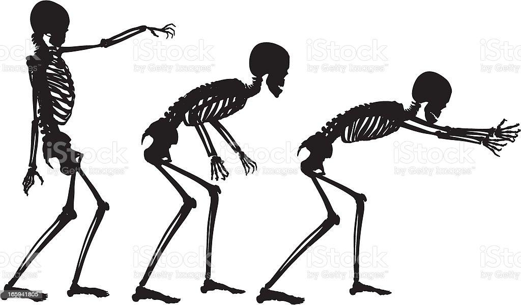 Vector Skeleton In Motion Stock Vector Art Amp More Images
