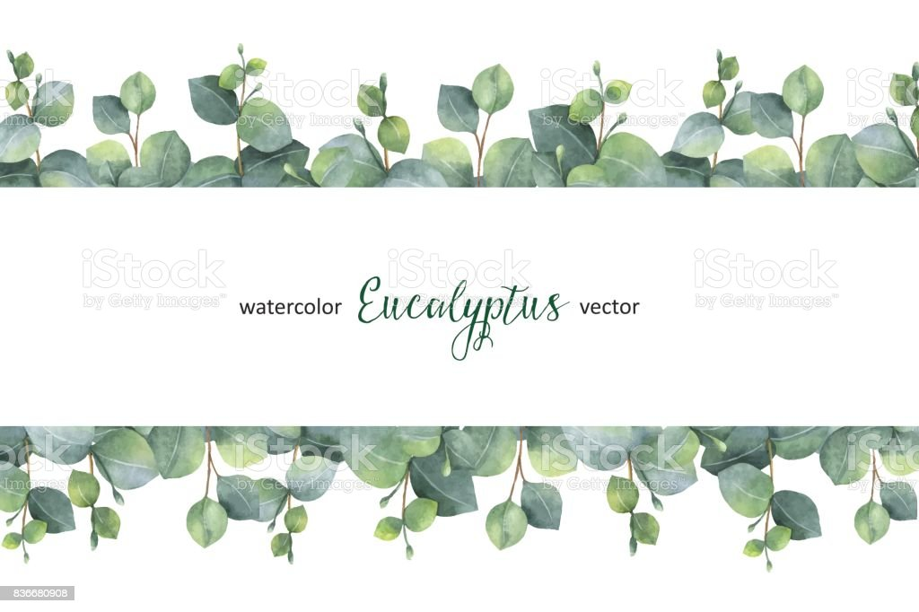 Watercolor Vector Green Floral Banner With Silver Dollar ...