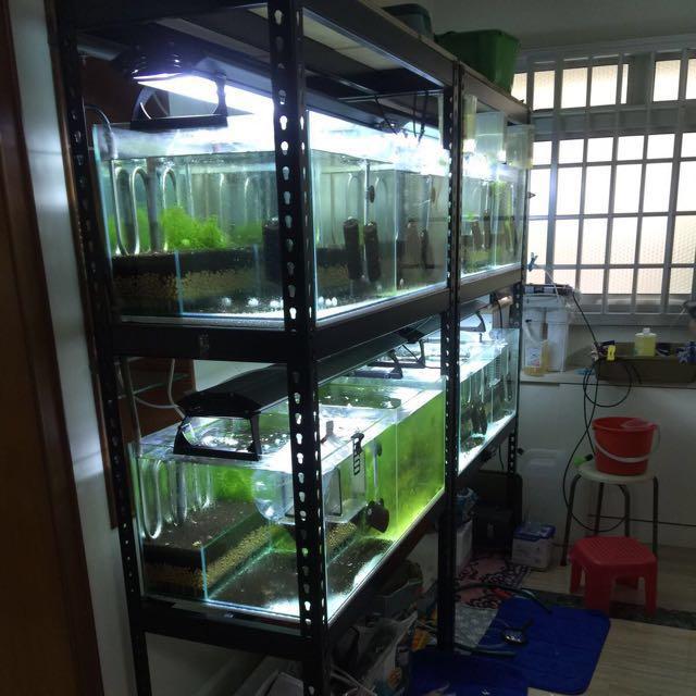 fish tank rack matte black pet