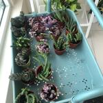 Cactus And Succulent Home Furniture Gardening On Carousell