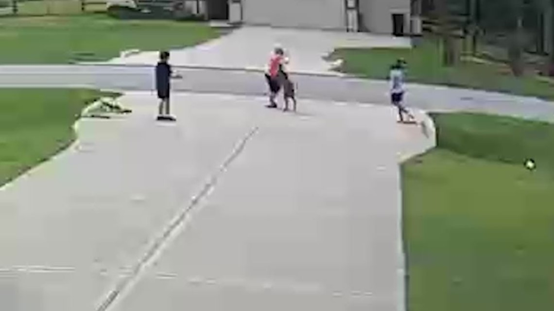 Pit Bull Saves 4 Year Old