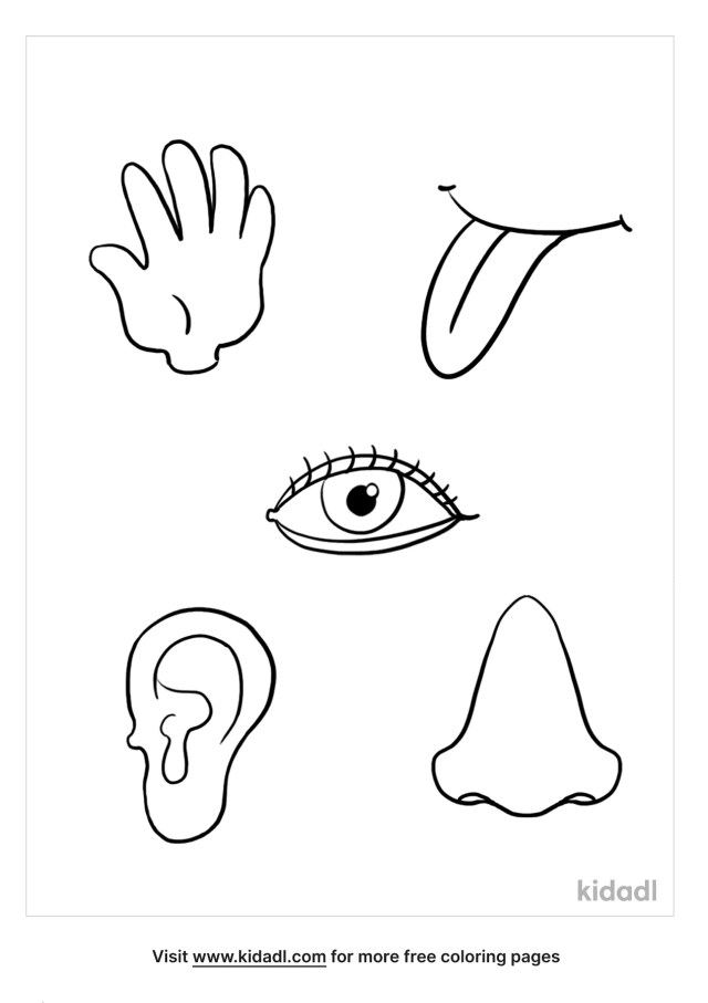 8 Senses Coloring Pages  Free Human Body Coloring Pages  Kidadl