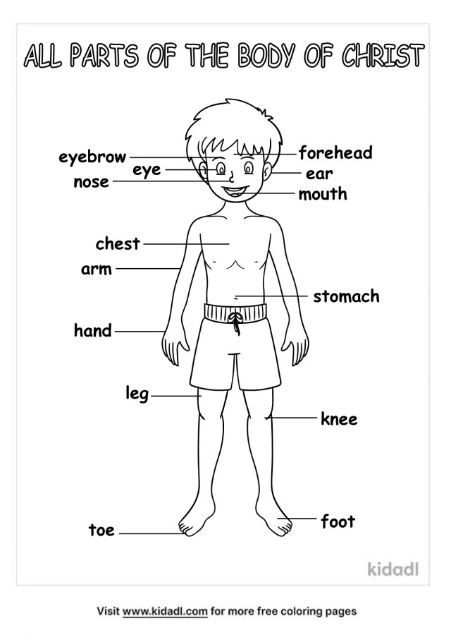 Body Of Christ Coloring Pages  Free Bible Coloring Pages  Kidadl