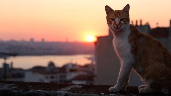 neustadt-kinotipps-ab-10-august: Kedi - Von Katzen und Menschen