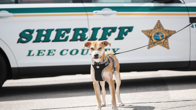 Dog found with mouth taped shut becomes K9 Deputy