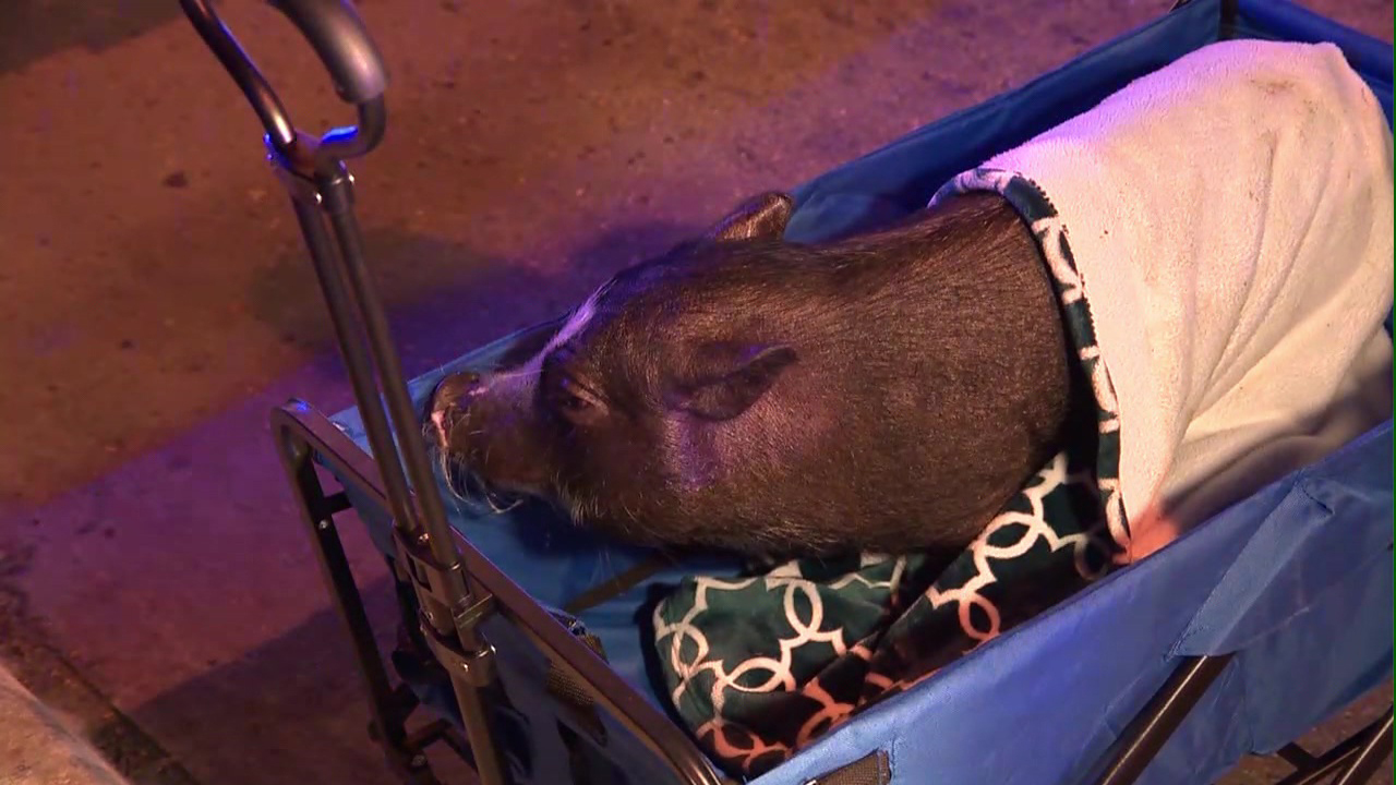 Crews Save 4 Legged Friends From 3 Alarm Downtown Apartment