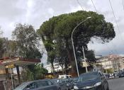 aversa aree verdi alberi