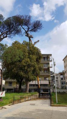 aversa parco pozzi taglio alberi