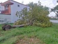aversa area standard via garofano albero (5)