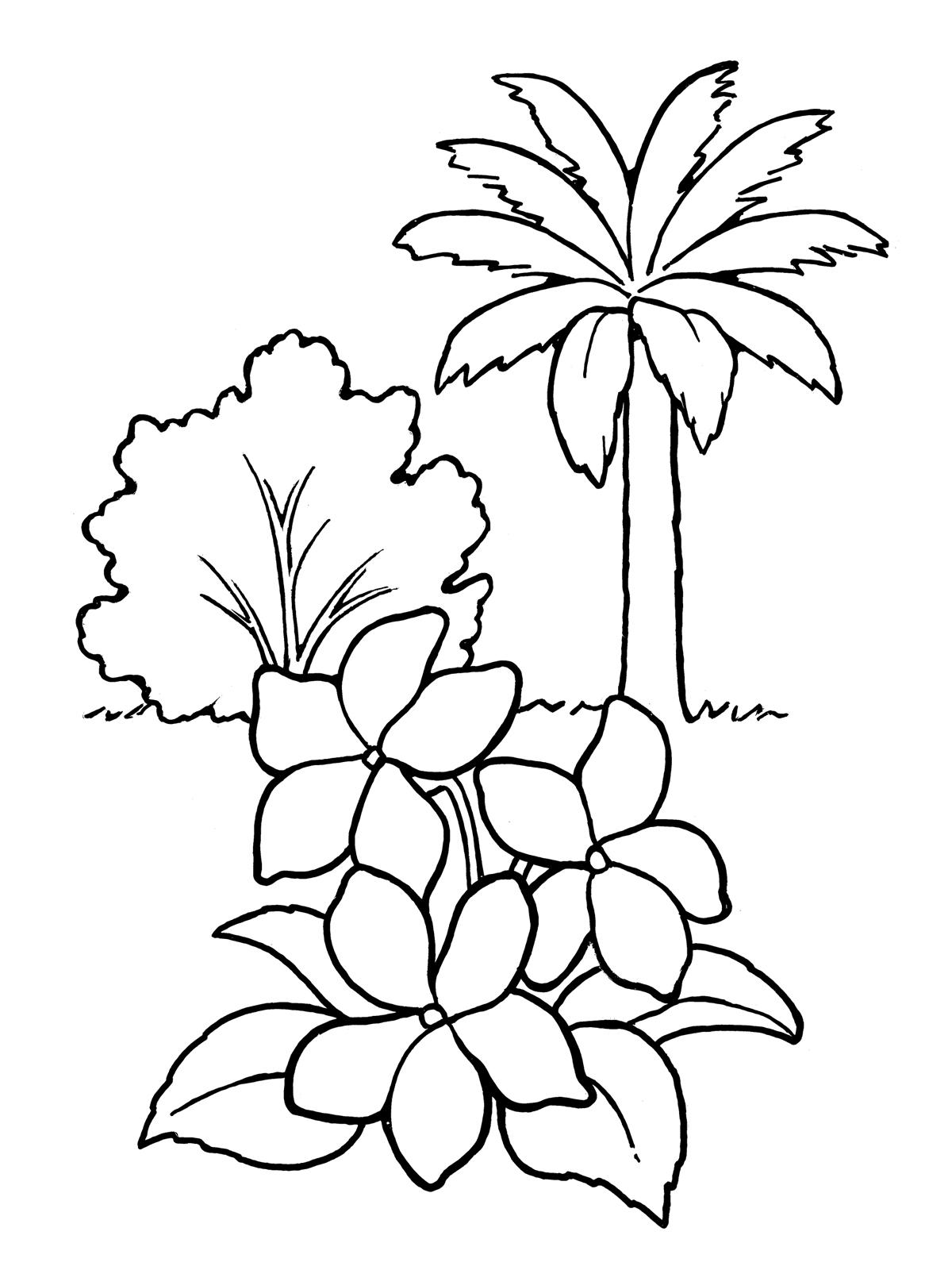 Oak Tree Diagram