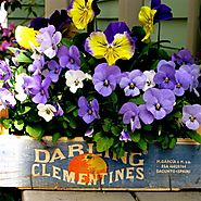 Container Gardening Ideas, Advice, Tips, Pictures and Designs