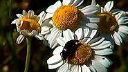 El universo escondido - Los jardines del sol, El universo escondido - RTVE.es A la Carta