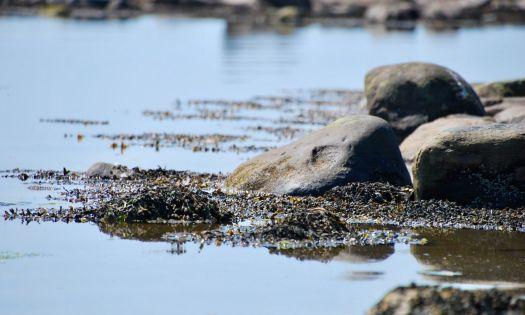 stenar tång vatten