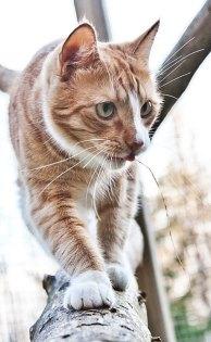 Guiness klätterkatt