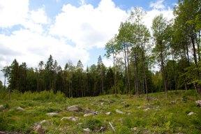 Grönskande landskap