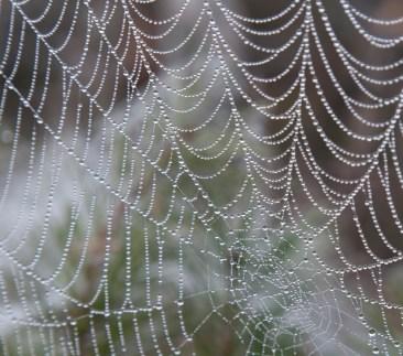 spindelnät som pärlhalsband