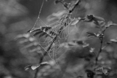spindelnät svartvitt