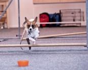 Agility Hundens hus hinderhoppning IMG_1285
