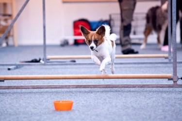 Agility Hundens hus hinderhoppning IMG_1315