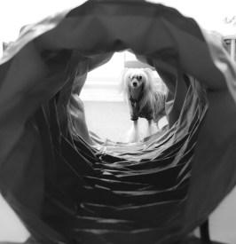 Agility Hundens hus Tunnel Stella IMG_1326