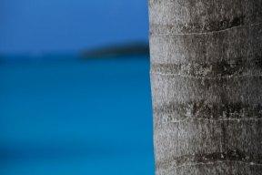 palmUtsikt från vår balkong på Cocos Hotel, Antigua December 2013