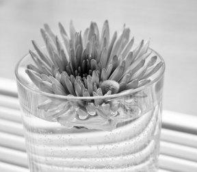 blomma i glas svartvitt