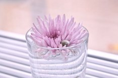 enbildomdagen2014 tid 140217, rosa blomma
