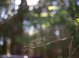 spindelnät IMG_7465