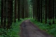 skog IMG_9034