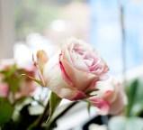 blomma-nya-lyanIMG_6601