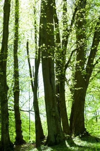 slottsskogenIMG_6700 - Kopia