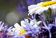 blommorIMG_7032