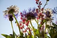 blommorIMG_7051