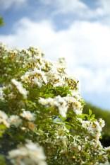 botaniska-rosorIMG_7124