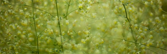 botaniskaIMG_7107