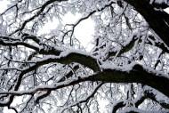 snö-träd2