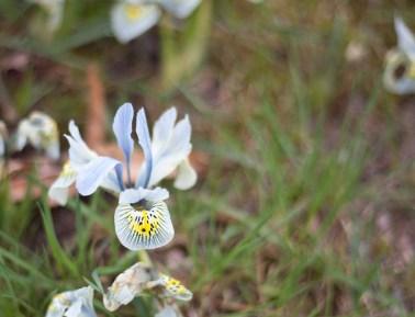 blomma-vår
